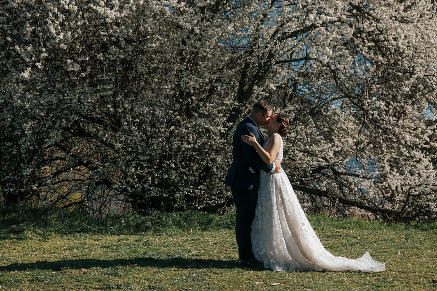Bride and groom among the blossoms in Queenstown